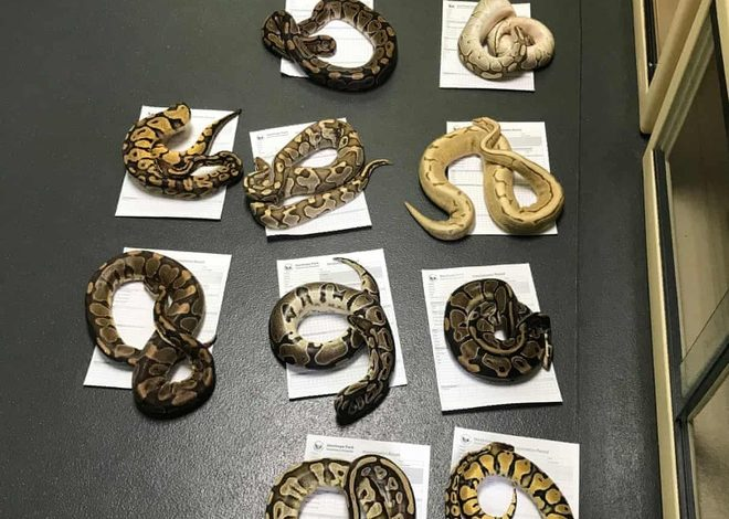 Photo of Found 16 Snakes and 13 Diamonds in the Pillow Case